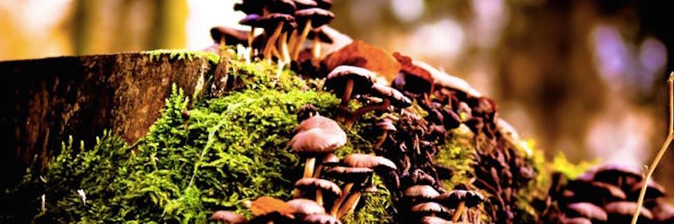 global-magic-mushroom-day-2021